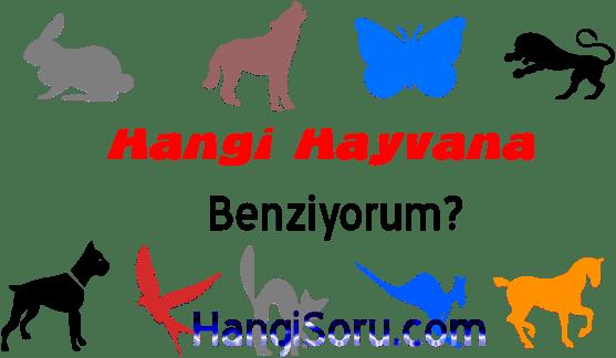Hangi Hayvana Benziyorum? TESTİ Çöz, Sonucu Gör