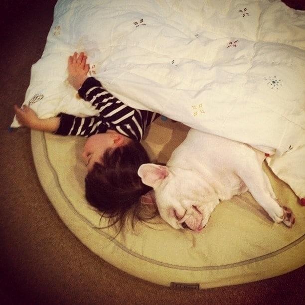 Hayvanların ve Bebeklerin Muhteşem Uyumları!